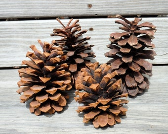PINE CONES, NATURAL craft supply item, Living Wall, Holiday decoration, Fall,Autumn, Wreathes, Centerpeices,Container, Wall display, DiY