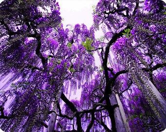 MOUSE PAD - * Purple Weeping Tree * Computer Mousepad Mat