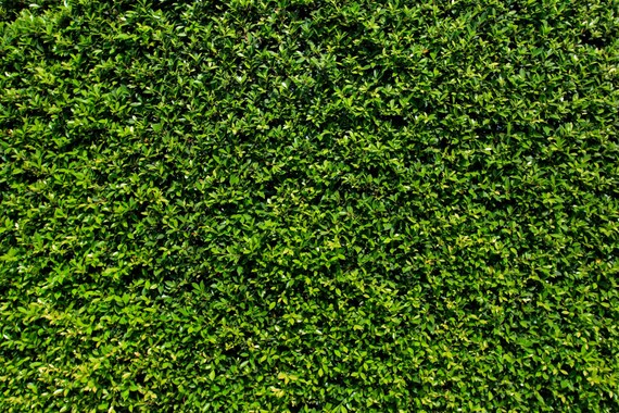 Grass Wall Backdrop Green Bush Wall Spring Summer