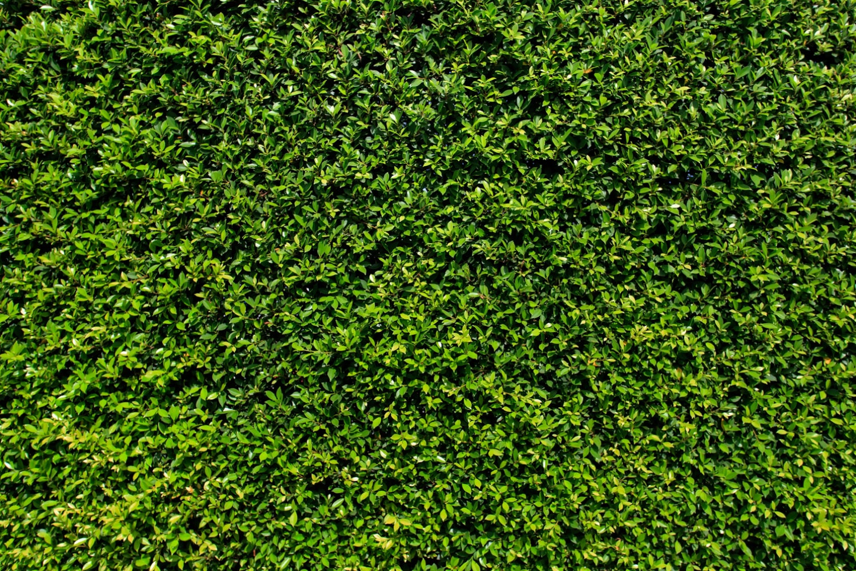 Grass Wall Backdrop Green Bush Wall Spring Summer