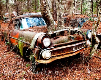 1955 Ford with a Tree Growing Where the Motor belongs Photograph