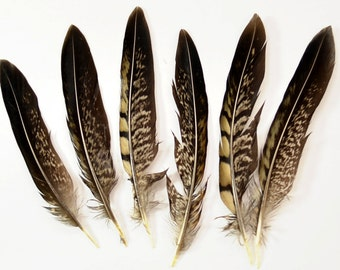 "Ringneck Pheasant Quill Wing Feathers No: 5E - Natural, 5""-6"" (6pcs)"