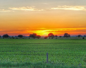 Field Sunset Accessories