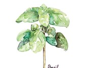 Basil Herb Painting - Pri...
