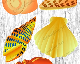 5 Shell clipart, starfish clipart, coral clipart, sea clipart, ocean clipart, beach clipart,digiral shell,rainbow shell,scrapbooking clipart
