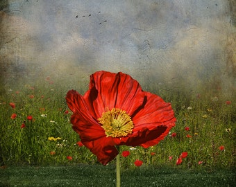 Poppy - Wall Art 8 X 8 inches - Printable - Download, print and cut