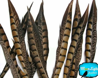 "Tail feathers , 10 Pieces - 8-10"" NATURAL Lady Amherst Pheasant Tail Feathers : 2228"