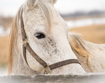 Dreaming, 3Butterflies Photography, white horse, horse stable, horse pasture