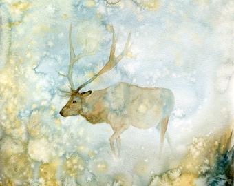 Elk Original watercolor painting 12x12inch