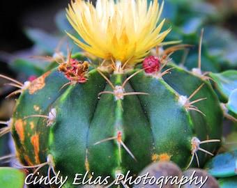 Blank note card, greeting card, photo note card, photo card, Cactus note card, note card, Cactus photography, Cactus print, mini cactus