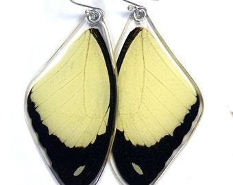 Butterfly earrings, Real Flying Handkerchief Swallowtail Butterfly (Papilio dardanus) (top/fore wings) earrings