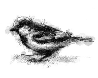 House sparrow | Limited edition fine art print from original drawing. Free shipping.