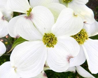 White Flower Photography, Dogwood Flower Art, Garden Print, Nature Photography, White Garden Photography,Spring Floral Print,Floral Wall Art