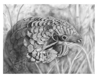 Pangolin - Signed 8x10 Art Print of Pencil Drawing - Endangered, Wildlife