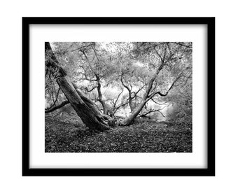 black and white photography, tree photography, black and white landscape photography, tree pictures, large wall art, black and white print