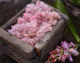 Blush Pink Reindeer Moss - Terrariums, Wreaths, Fairy Gardens, Model trains, headbands, - Preserved organic moss.50- 100gr/ 1.75-3.5oz