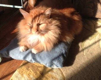 Upcycled Comfy Jean Denim Cat / Small Dog Pillow Bed - Custom Made - The CAT'S MEOWWWWWWWWWWWW - Woof Woof 21 x 12