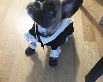 Dog costume, Dog Alexander Hamilton costume, Dog halloween costume, Alexander Hamilton costume,