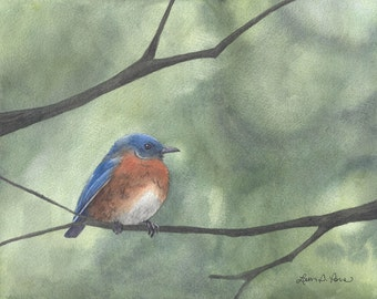Bluebird Watercolor Print from an Original Painting by Laura Poss, Two sizes- 5 x 7 inches and 8 x 10 inches- Bird Art Giclee Reproduction