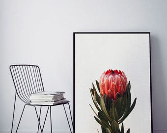 50%OFF,  Protea Print, Bedroom Decor, Modern Contemporary, Large Printable Poster, Digital Download, Photography