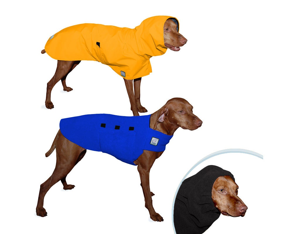 Vizsla warm climate special raincoat tummy warmer hood dog zoom nvjuhfo Images
