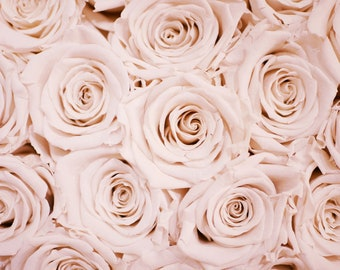 Pink Rose Flower Blooms Bouquet Art Print Wall Decor Image - Unframed Poster