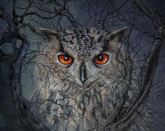 Beautiful Owl, Forest, Night Scene, Original Art, Archival Print, Home Decor, Owl Eyes, Night Hunter