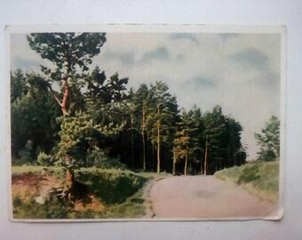 Vintage Art Colour Postcard, Scenic Landscape, Woodland landscape, Paper Ephemera, Used, Art Print, Vintage Postcard, Landscape Postcard