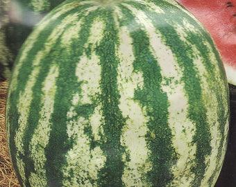 Watermelon seeds Ukraine heirloom Berries Fruit seeds Astrakhan#615