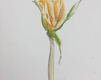 Yellow Rose Original Watercolor1