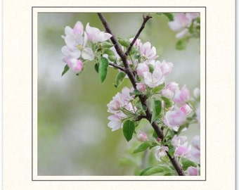 Apple Blossom Photography Card - Photography Greeting Cards - Spring Blossoms Card - Flower Photography Card