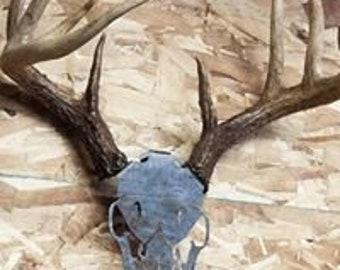 DIY Shed antler mount