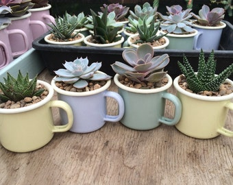 Enamel Espresso Cups in Ice-Cream Colours with a Succulent - Gardening Gift