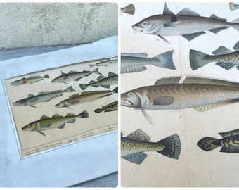 Vintage Antique 1900 French SCHUBERT chromolithograph on cardboard FISH