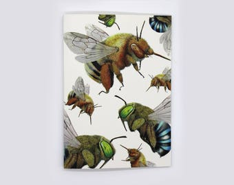 4-pack Blue-Banded and Teddy Bear Bee cards