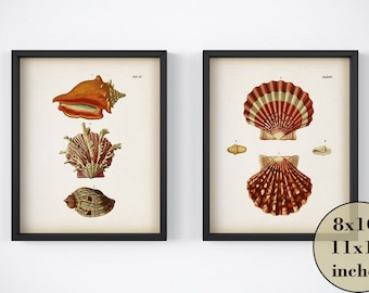 Wall art nautical, Set of 2 nautiqal prints, Shell print set, Printable art, Instant download prints, Art print set, Digital print vintage