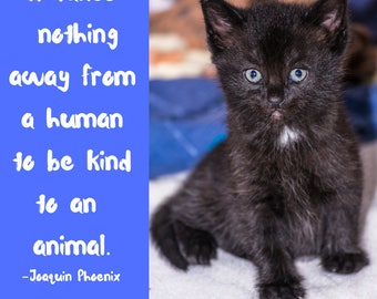 Digital Art Quote| Downloadable quote It takes nothing away from a human to be kind to an animal.