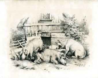 Beautiful French Antique Etching  circa 1850 -  Farm Life - Pigs