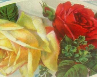 Pretty Vintage/Antiqe Roses Postcard