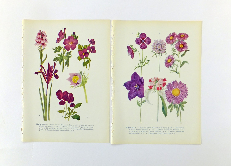 Arte Botánico flores de color púrpura Vintage botánico