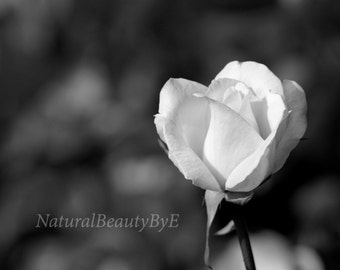Black and white rose print, flower photography, macro photography, garden rose art print, floral wall art, flower print, fine art, nature