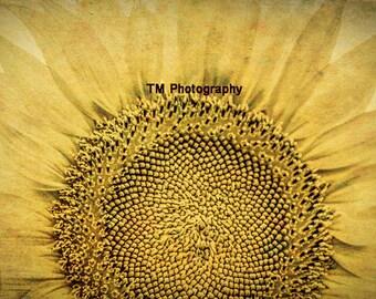Sunflower - Macro - Flower - Nature - Yellow - Kansas State Flower - Fine Art Photography