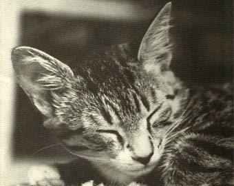 Refrigerator Magnet to bring an adorable kitten smile Vintage Photo Squeaky and You
