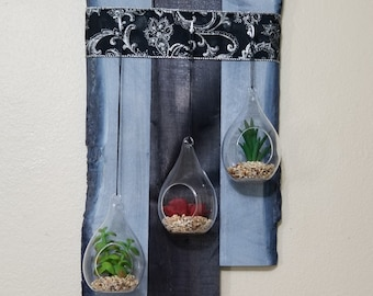 Air plant wall display