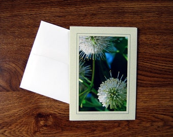 5x7 Photo Note Card; Sage Notecard; All Occasion Card; Blank Notecard