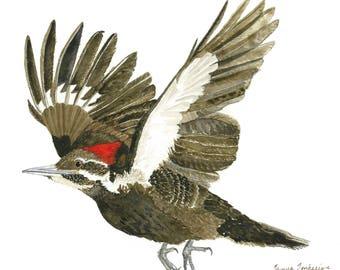 Pileated Woodpecker in Flight, woodpecker, art print, birdwatcher, woodland, Audubon
