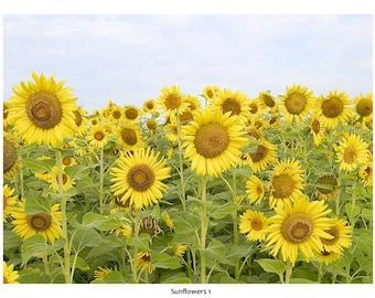 Sunflower Series Notecards (8)