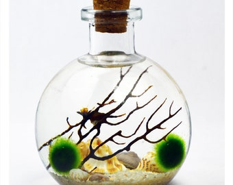 Bottle Terrarium - Live Moss Ball Terrarium - Japanese Moss Ball Aquarium - Bottle Jar - Cork Stopper Glass Vase - Home - Office -
