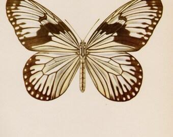 Vintage Schmetterling Wand Kunst Dekor Antik Schmetterling Print Natur Geschichte Druck Galerie Wand Kunst See Haus Dekor Insekten Sammler Geschenk 3039
