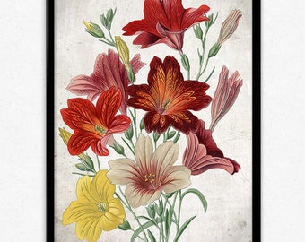 Red Yellow and White Flower Vintage Print - Flower Poster - Flower Art - Flowers Picture - Home Decor - Home Art - Living Room Art